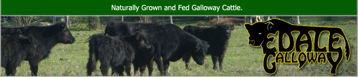 Galloway Meat